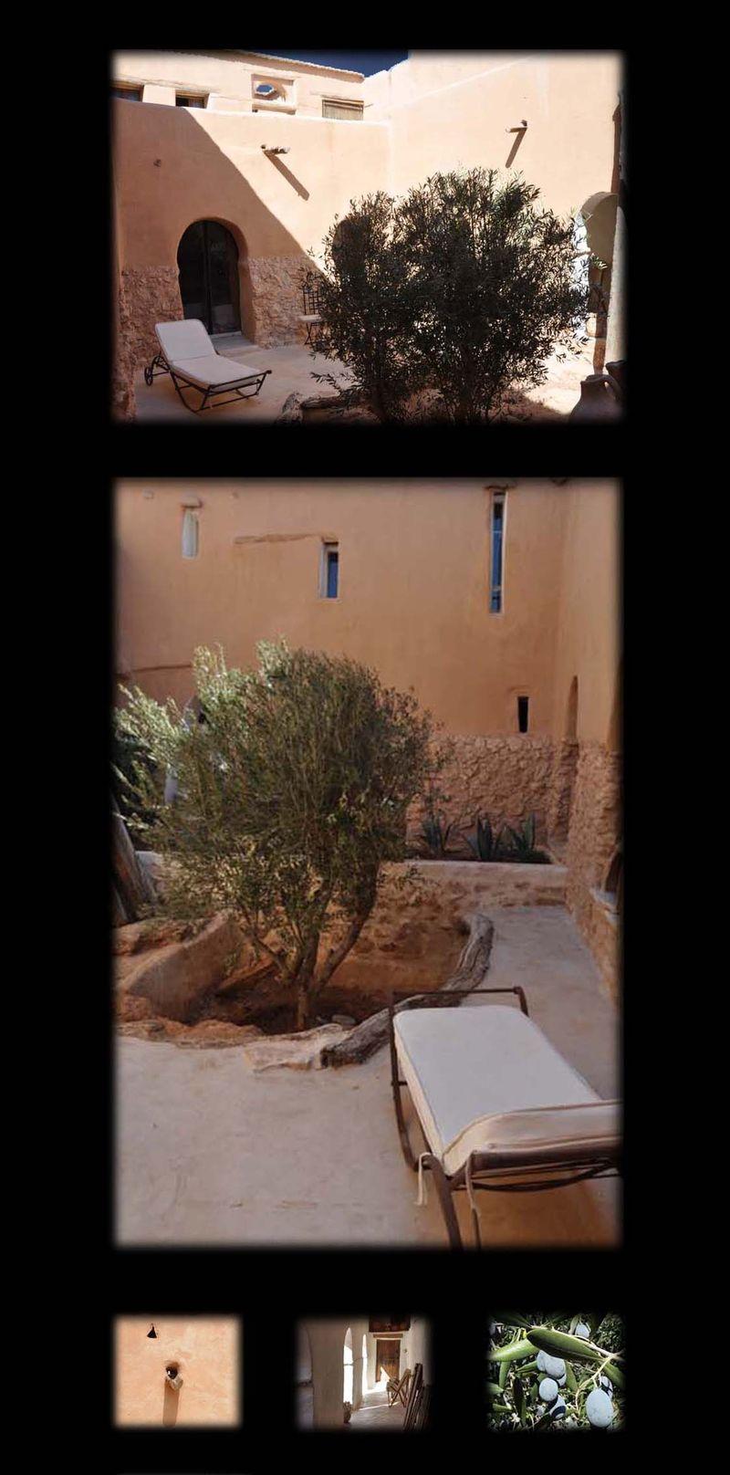 L'olivier de Mona